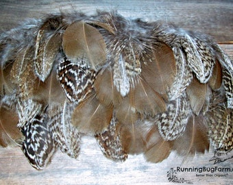 """Natural Feathers Silver Pheasant Feathers Loose Feathers Eco Plumes Real Feathers Brown Real Bird Feathers For Crafts 25 @ 3"""" - 3.5"""" / SPH"""