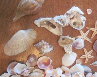 Large Lot of Sea Shells for Crafts
