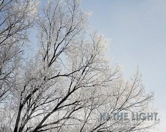 Frozen Fog 1 - fine art photography - Winter Home Decor, Wall Art