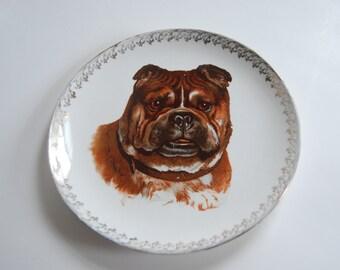 Vintage Bull Dog Decorative Plate