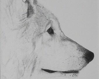 Wolf Pen and Ink Drawing