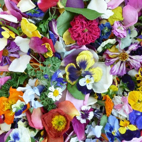 Wedding Flower Confetti, Dry Flowers, Wedding Decorations, Flower Petals, Aisle Decor, Centerpiece, Reception, Flower Girl, For 55 Guests