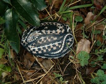 Checkered Garter Snake - Hand Painted Rock Art - Realistic Garden Decor