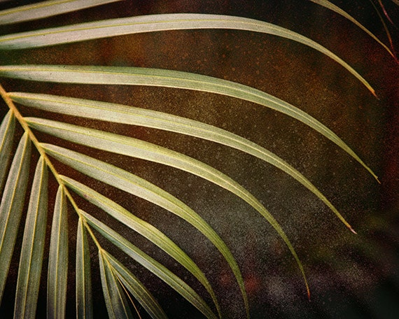 """Abstract Fern Leaf Photograph """"Serenity"""". Affordable Modern Fine Art Nature Print. Caribbean."""