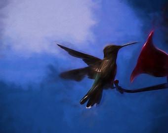Hummingbird Visit - photo art Lustre print, wall decor, home styling, hummingbird art, wall art for home, office, dorm