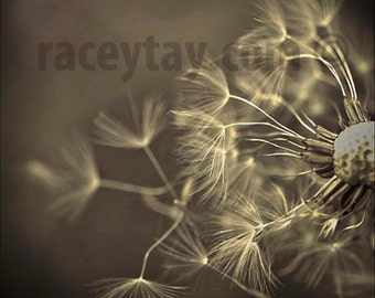 Sepia Decor, Dandelion Wall Art, Gray, Black, Flower Photography, Rustic Decor, Beige, Rustic Wall Art