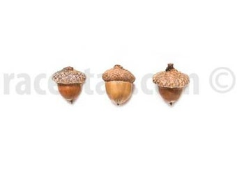 Acorns Print, Fall, Food Photography, Kitchen Art, White, Brown, Large Wall Art, Rustic Kitchen Decor, Minimalist