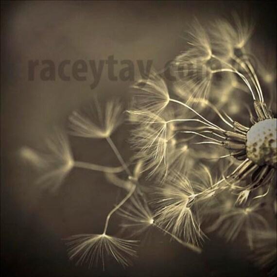Sepia Decor, Dandelion Print, Gray, Black, Flower Photography, Rustic Decor, Beige, Romantic Wall Art