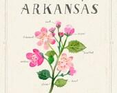 Arkansas State Flower Print, The Apple Blossom
