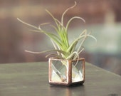 Mini Air Plant Holder Stained Glass Terrarium Cubed Glass Clear Copper Colored Box Planter