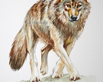Wolf painting - Original watercolor study