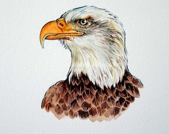 Bald Eagle Portrait - Original watercolour painting
