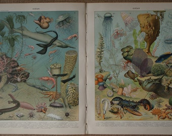 OCEAN  a Pair of Vintage French SEALIFE ILLUSTRATIONS by Vignerot Demoulin art prints from Nouveau Larousse Illustre 1897-1904