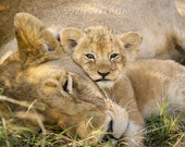 LION BABY and MOM Photo P...