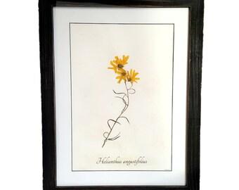 Framed Botanical Art - Real Pressed Sunflower - Archival Frame