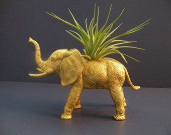Air plant in gold elephant planter.
