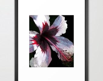 Lavender,  Hibiscus, Botanical, Hawaii, Print