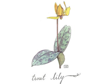 Trout Lily, Watercolor Botanical Illustration, Postcard