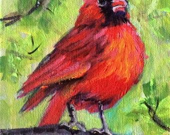 Red cardinal bird no.5 painting original art 5 x 7