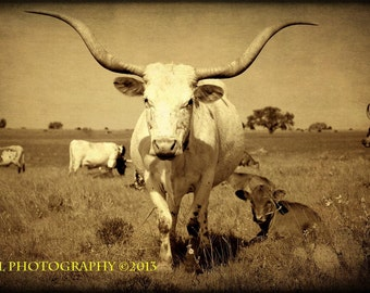 Western Photography Texas Longhorn Fine Art Photography