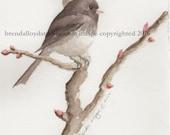 Junco, Backyard Birds, Winter Birds, Wildlife, Watercolor Print