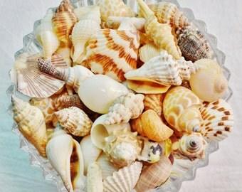Sea Shell Mix ~ SALE ~ Bag of Small Shells (approx 7 ounces) ~ Sea Shells ~ Tiny Shells ~ Small Shells ~ Mix of Shells ~ Crafting Shells