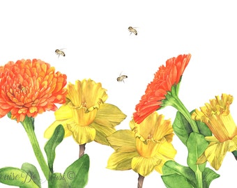 Calendula and daffodil watercolor print, C3316, botanical print, spring print, orange and yellow living room wall art A3 size largest print