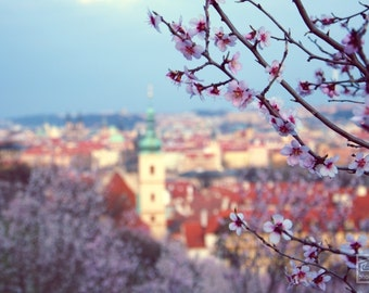 Prague photography, Spring landscape, Petrin hill, late afternoon light, Nature photography, Prague print, Pink and blue, Cherry blossom art