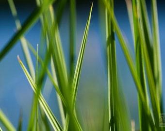 Green Grass photo, Nature photography, Fresh green print, Macro photography, Abstract nature art, Botanical art, Green and Blue décor