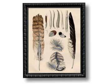 Feathers Educational Chart Vintage Style Art Print Natural History Feather Bird Anatomy Blue Brown