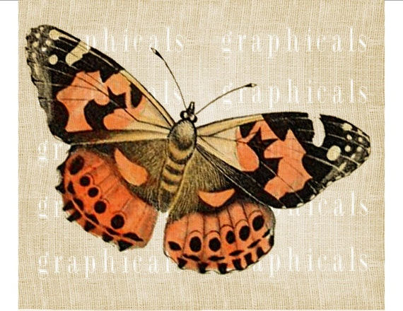 Items similar to Painted lady butterfly instant clip art ...