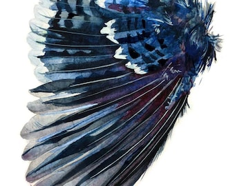 Cyanocitta cristata: Blue Jay Wing, Watercolor Giclee Print, Natural History Painting, Wall Decor