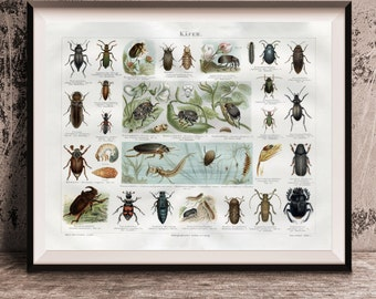 Natural History Insects Beetles Repro Photo Poster Print 8x10 to 30x40