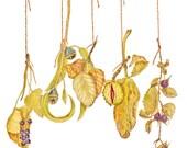 Harvest Hangings with Berries, Eucalyptus, Birch, Chestnut & Brambles, Autumn Festoon, Autumn Garland, Harvet Garland, Fall Wreath, Season