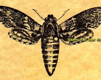 Convolvulus Hawk Moth Rubber Stamp