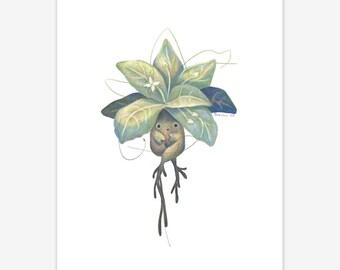 Mandrake Mythical Creature Print A5