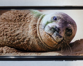 iPhone 6 Protective Case Cover w/ Hawaiian Monk Seal Lying on the Beach
