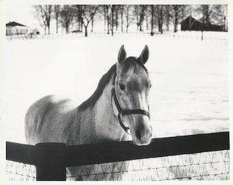 Snow Lonely - Vintage 1960s Solitary Winter Horse Photograph, Large Kodak Portrait