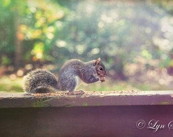 Squirrel, Nature, Landscape, Animal, Wildlife, Winter, Fall, Photography, fine art, wall art