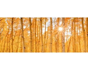 Colorado Landscape 1:3 Wide Panoramic Photography Print - Aspen Trees - Rocky Mountain - Autumn Fall - 8x24 12x36 16x48 20x60