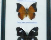 REAL 5 BEAUTIFUL BUTTERFLY Wall Decor Collection frame /BA05uu