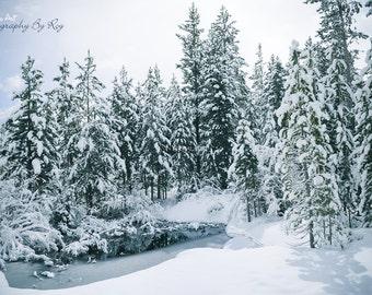 Colorado Snow, Hike to Emerald Lake. Rocky Mountain National Park Cabin - Original Winter Landscape Photography, blue moody