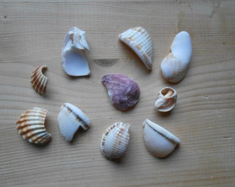 Shell fragments, craft supply, 10 pieces, jewelry supplies, surf tumbled shell fragments C18