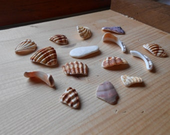 Shell fragments, craft supply, 15 pieces, jewelry supplies, surf tumbled shell fragments C19