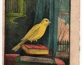 Antique print Yellow Bird 1870 Books
