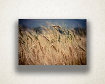 Wheat Crop Canvas Art, Farmland Wall Art, Farming Canvas Print, Wheat Close Up Wall Art, Photograph, Canvas Print, Home Art, Wall Art Canvas