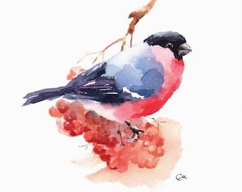 Bullfinch - Original Watercolor Bird Painting 7 4/5 x 7 4/5 inches