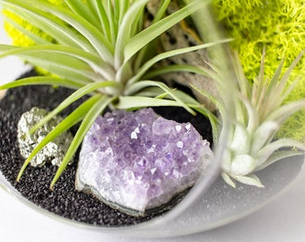 Hanging Terrarium Kit Amethyst Cluster and Pyrite Air Plant || February Birthstone || DIY Kit || Large Round