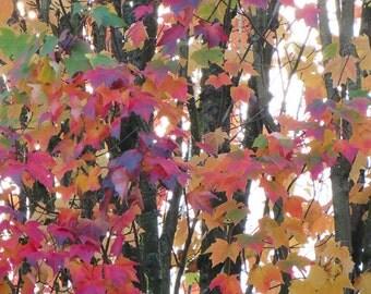 Autumn Leaves 9