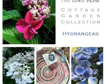 Hydrange Inspired Basket - The Cottage Garden Collection - Made to Order